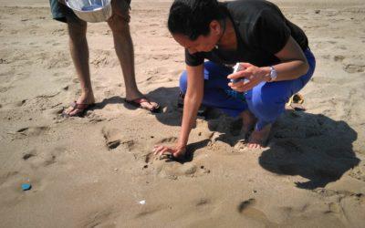 Un estudio detecta una alta concentración de microplásticos y presencia de fibras de poliéster en la costa tarraconense
